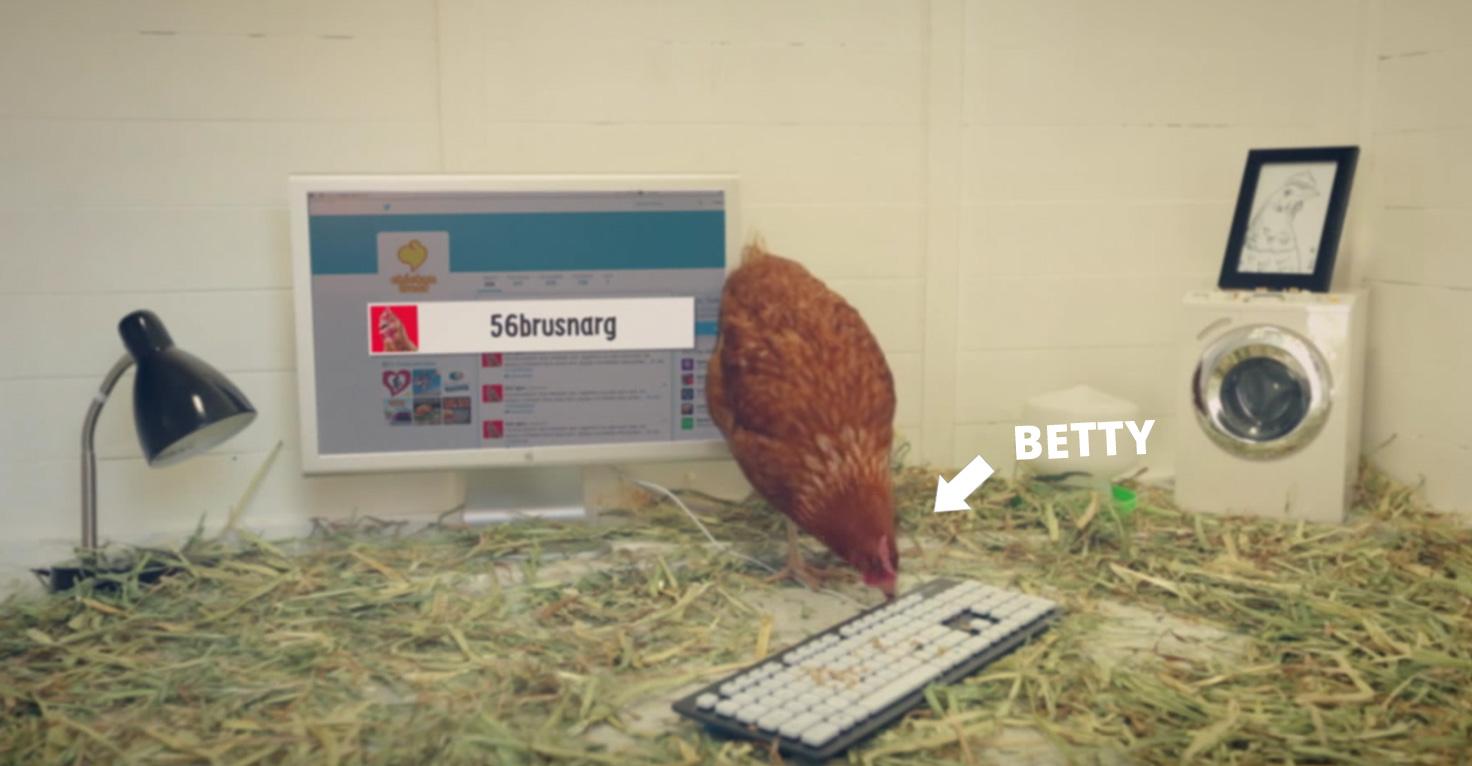 Kura nowym specjalistą odsocial media sieci Chicken Treat!