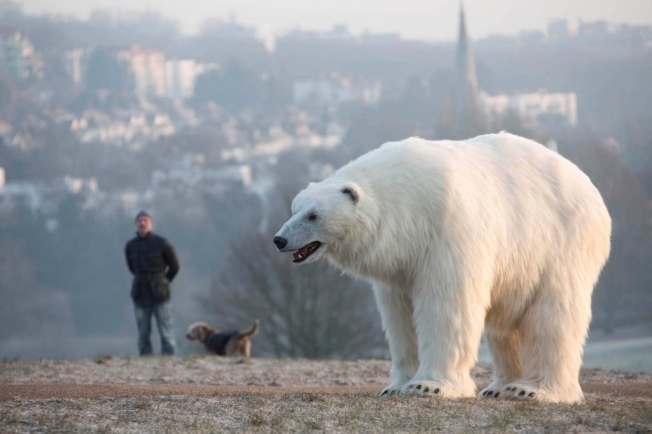 polar-bear-london-hed-2015