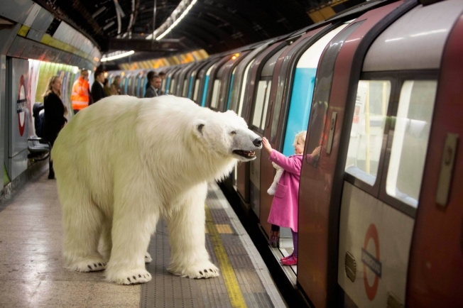 polar-bear-london