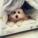 Pełna personalizacja. Łóżko zprzytulnym miejscem dla psa.